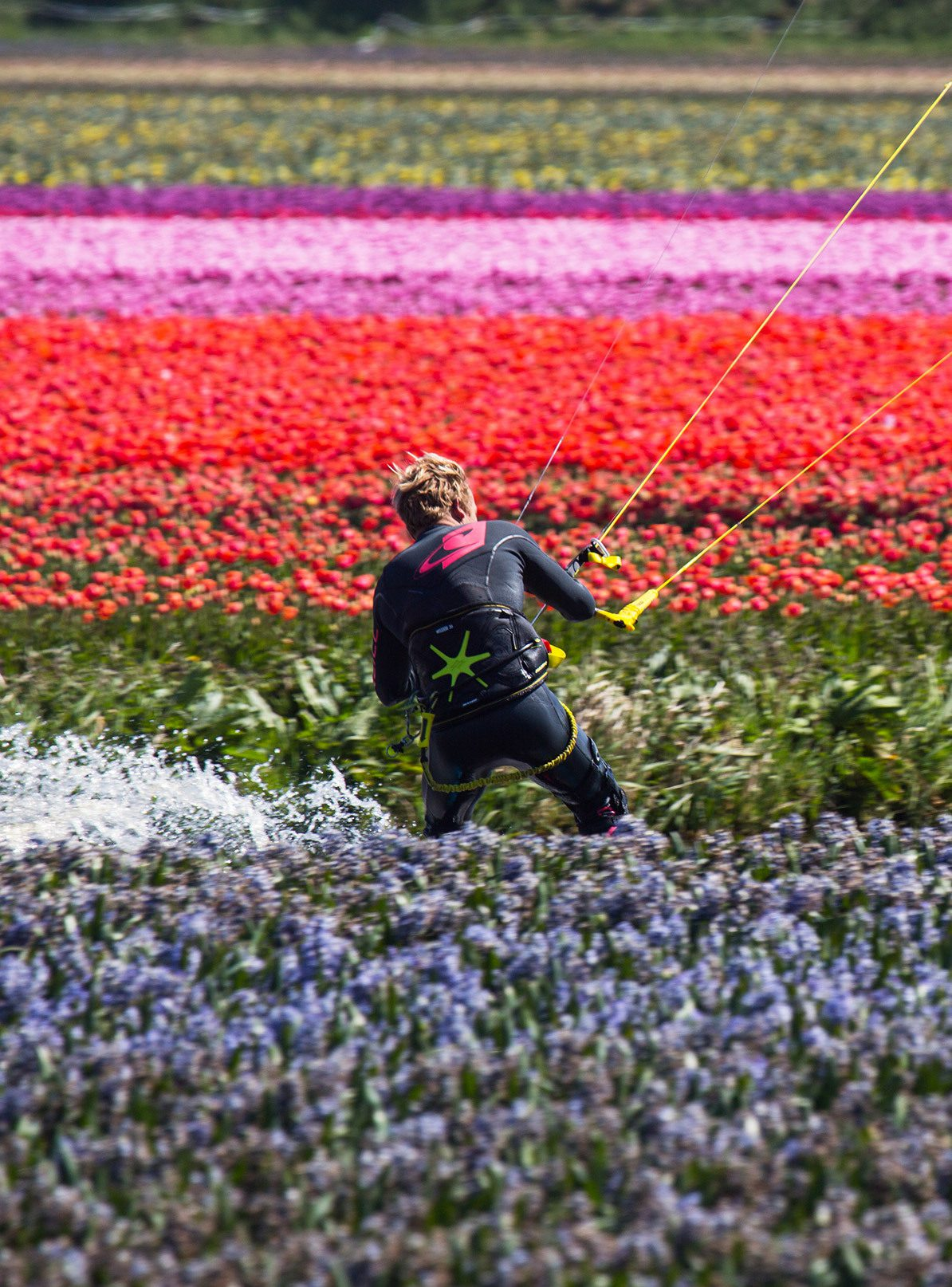 Netherlands Color